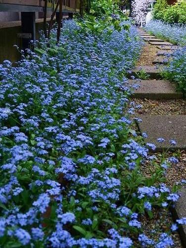 bluegarden2.jpg
