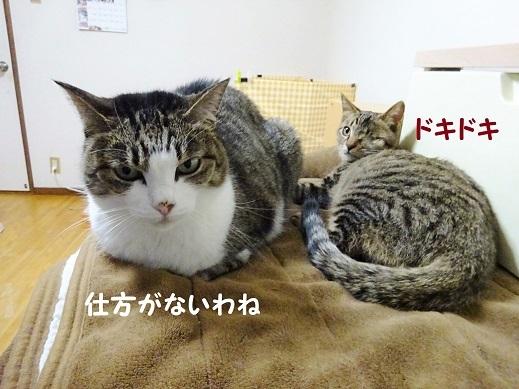 まる・カプリオ2