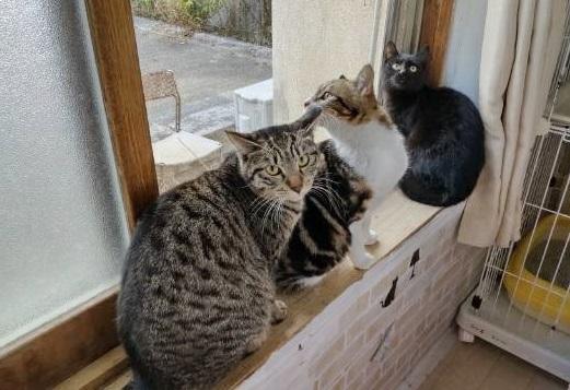猫3 (1)
