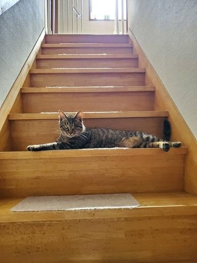カプリオ階段1