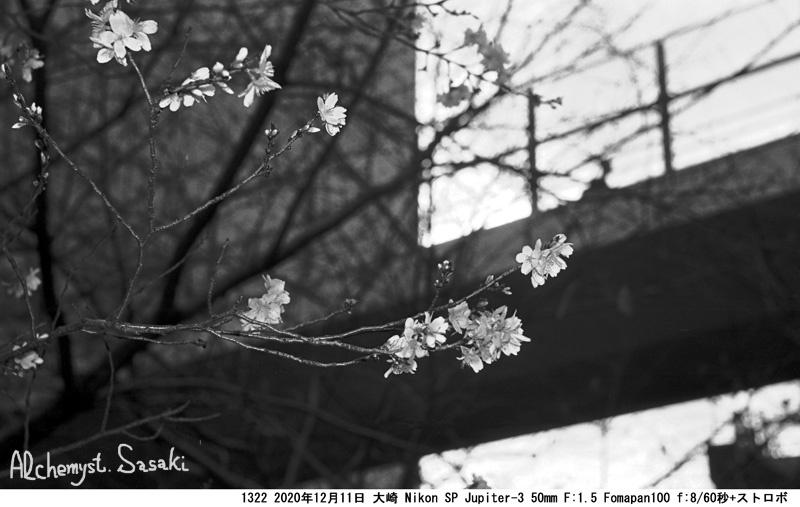 春を呼べ1332-6