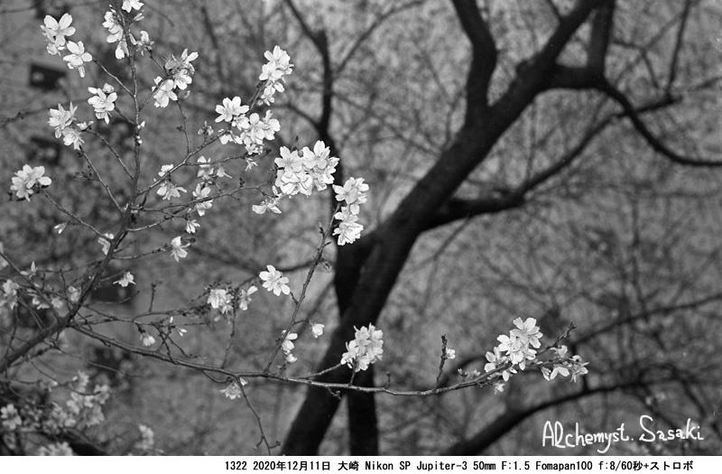 春を呼べ1332-7