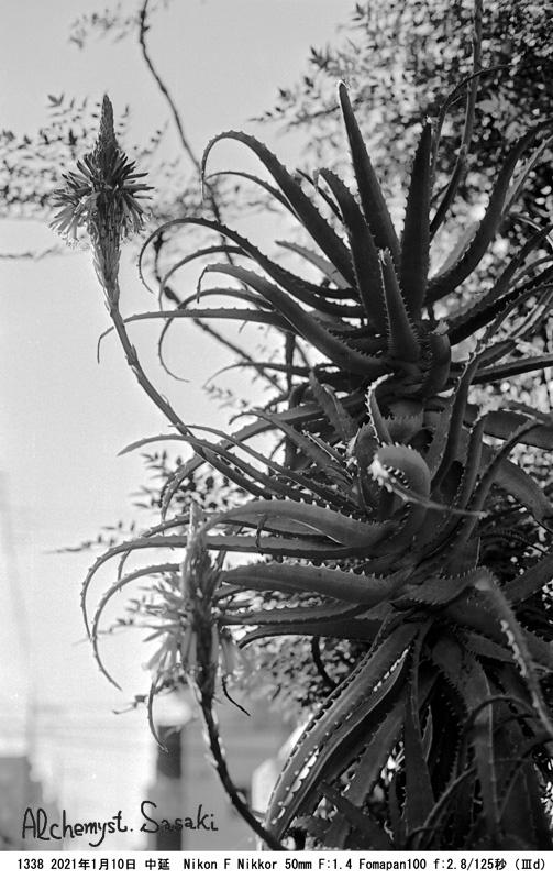 冬 散歩 植物1338-26