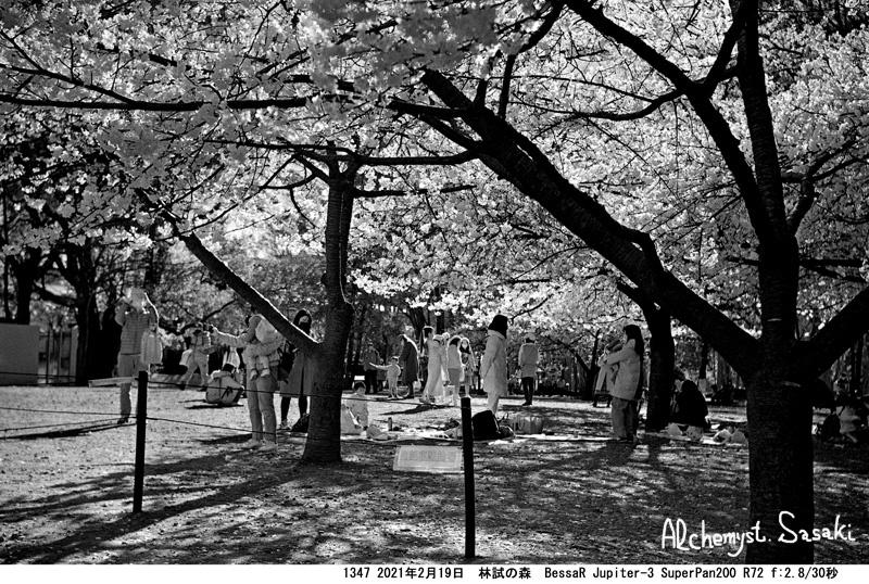 赤外線写真・林試の森1347-2