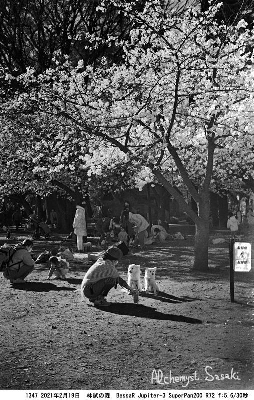 赤外線写真・林試の森1347-4