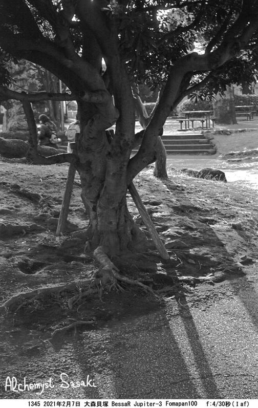 大森貝塚1345-29