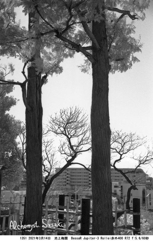 池上梅園1351-29