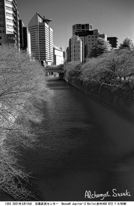 目黒川の桜1352-19