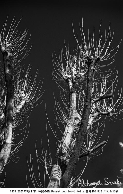 林試の森1353-9
