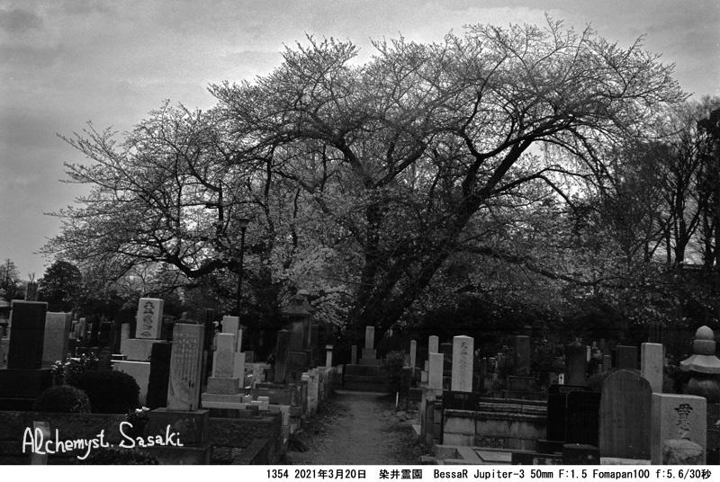 染井霊園1354-39