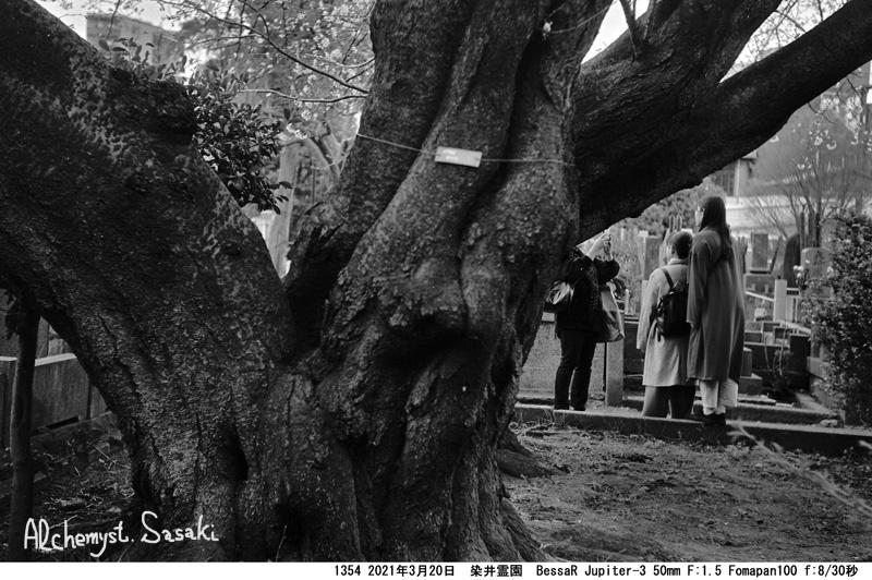 染井霊園1354-41