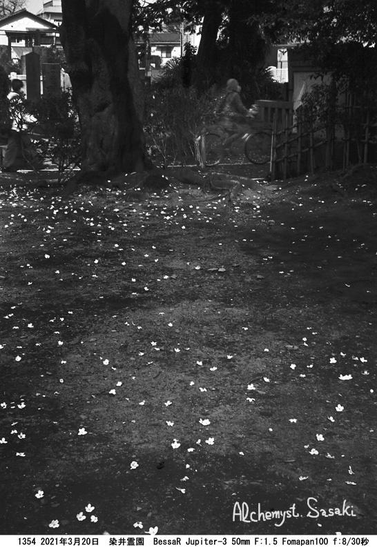 染井霊園1354-44 Ⅱ