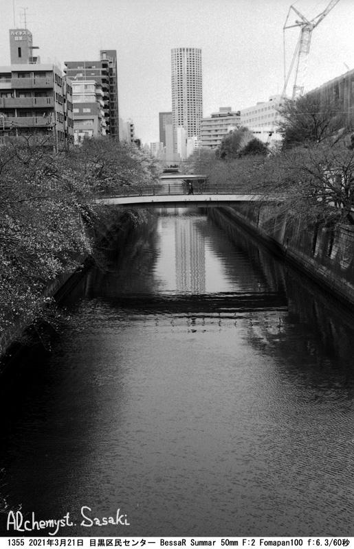 目黒川の桜3月21日1355-34