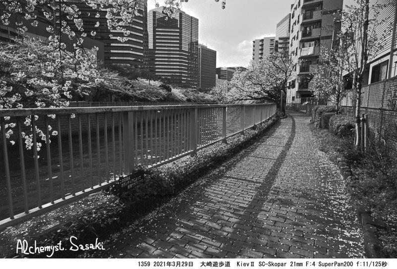3月29日大崎・目黒川1359-28