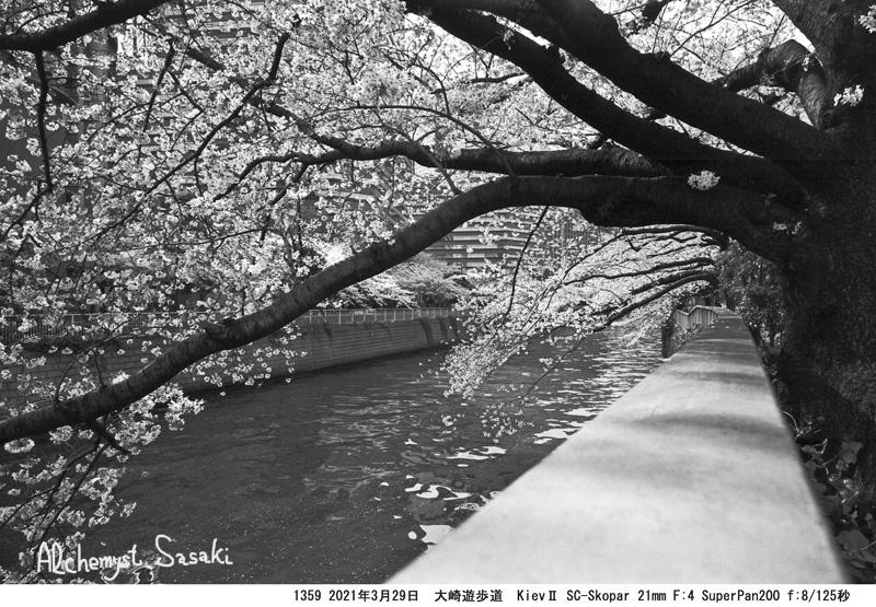3月29日大崎・目黒川1359-29