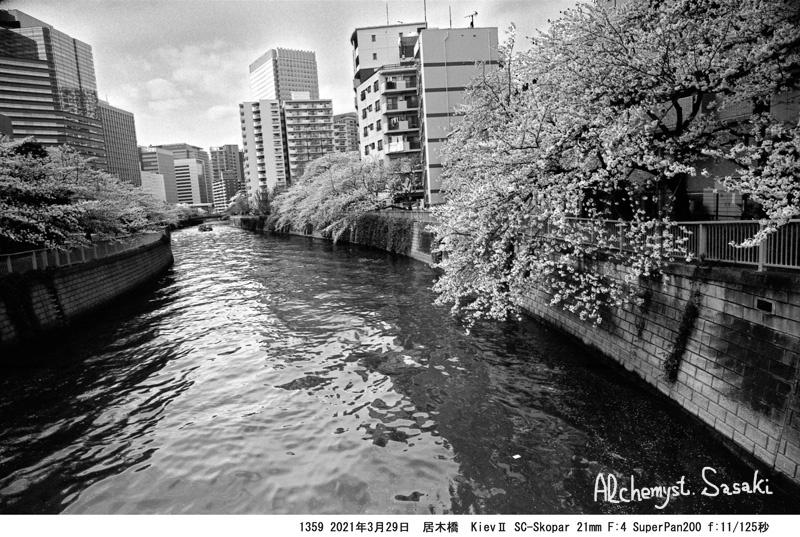 3月29日大崎・目黒川1359-23 Ⅱ