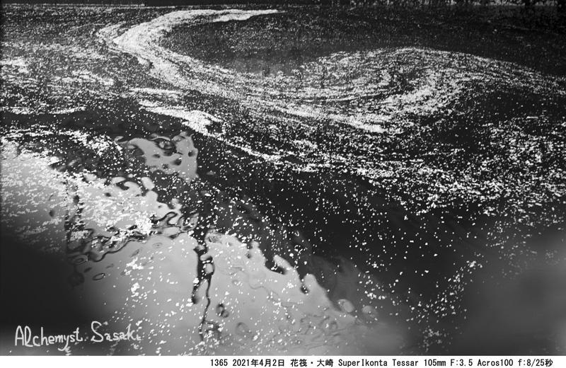 4月2日 目黒の桜の名残1365-2