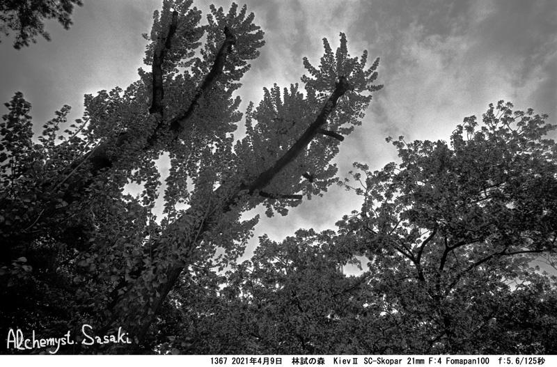 林試の森1367-12