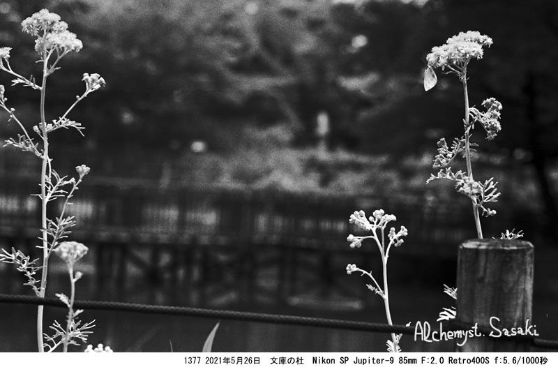 NikonでJupiterレンズ1377-28