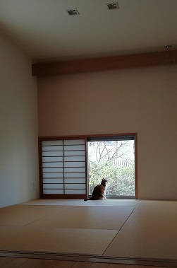 和室とあんこ