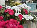隣家のお花さんたち☆