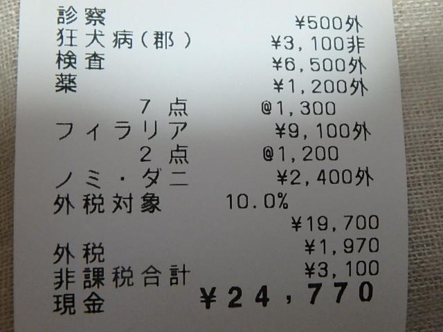 P4281242.jpg