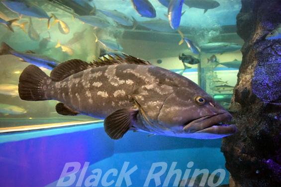 クエ01 魚津水族館