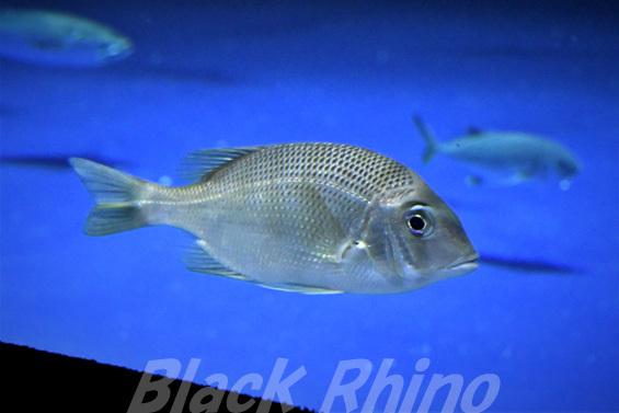 メイチダイ01 四国水族館