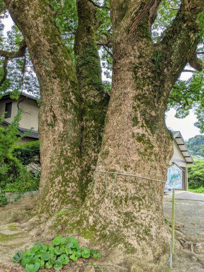 2-3巨木