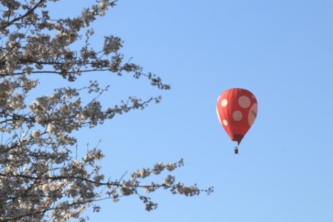 気球とサクラ