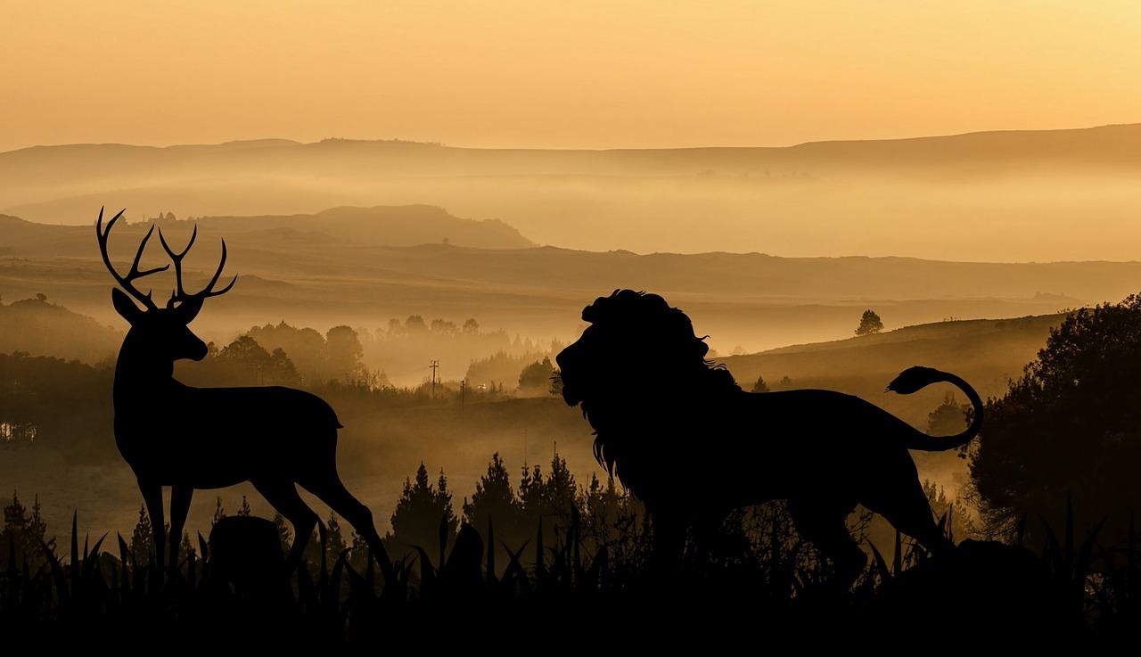 lion-3436888_1280.jpg