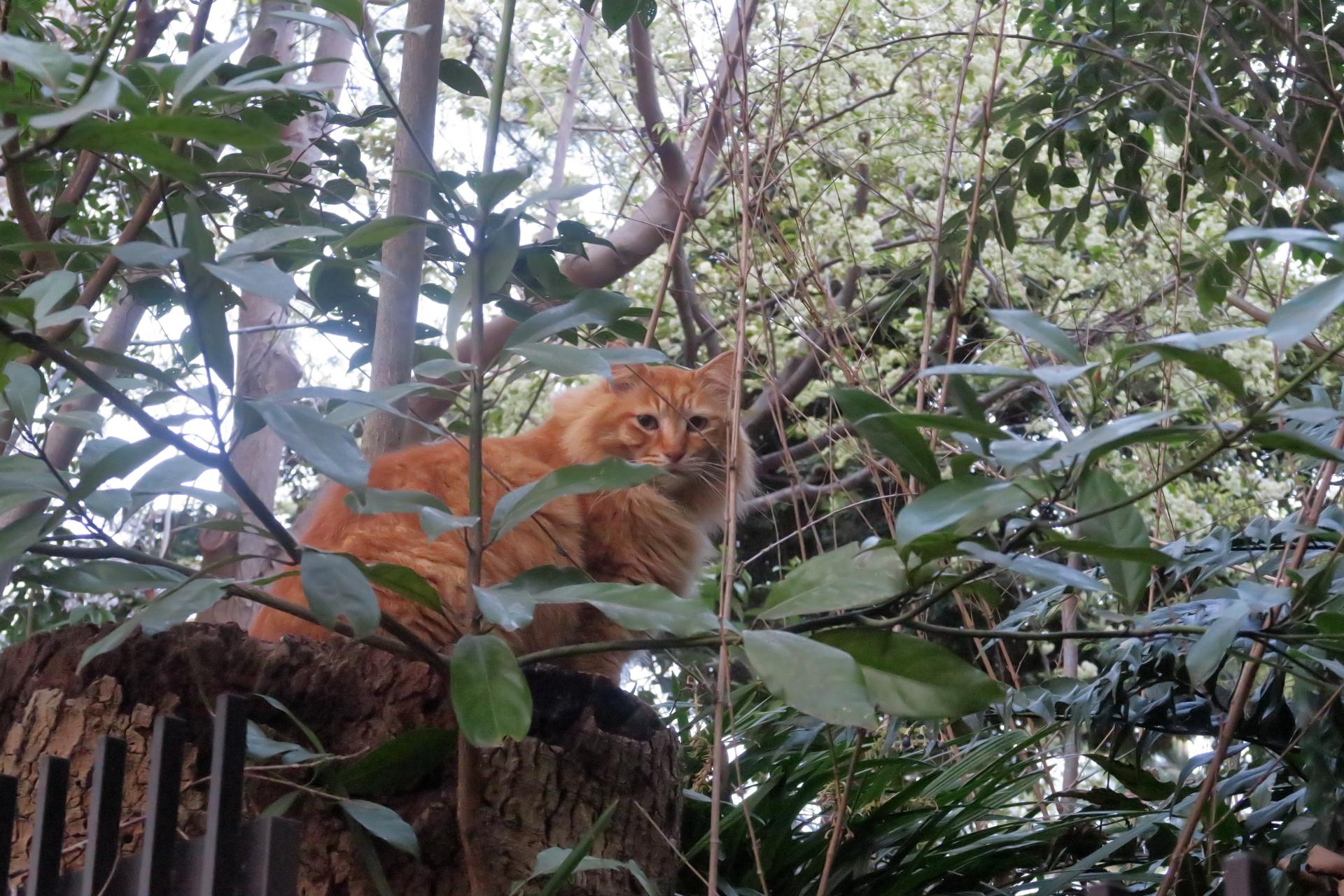 幹の上の猫
