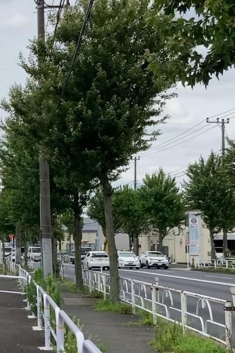 20210628 murayamataishoken-12