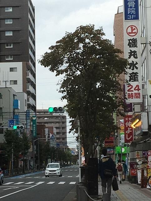 nakayoshi31.jpg
