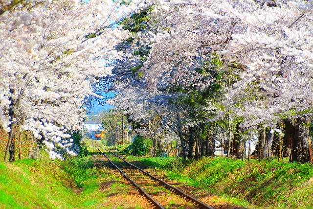 芦野公園4