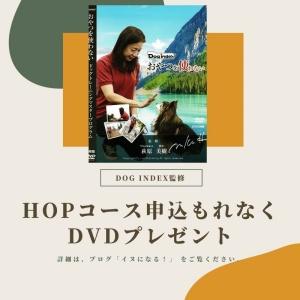 DVDブログ