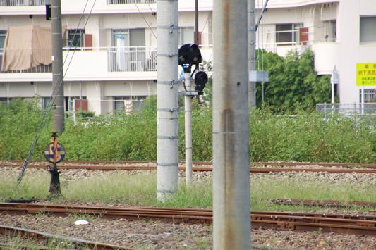 20140907仮屋川操 (29)c