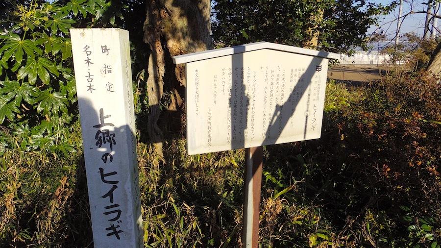 上郷5号墳5「ヒイラギ」の説明板