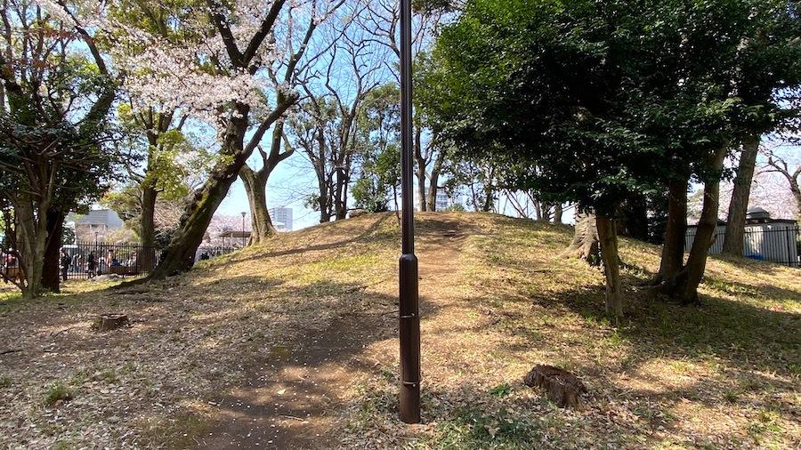 北区 桜と飛鳥山1号墳2