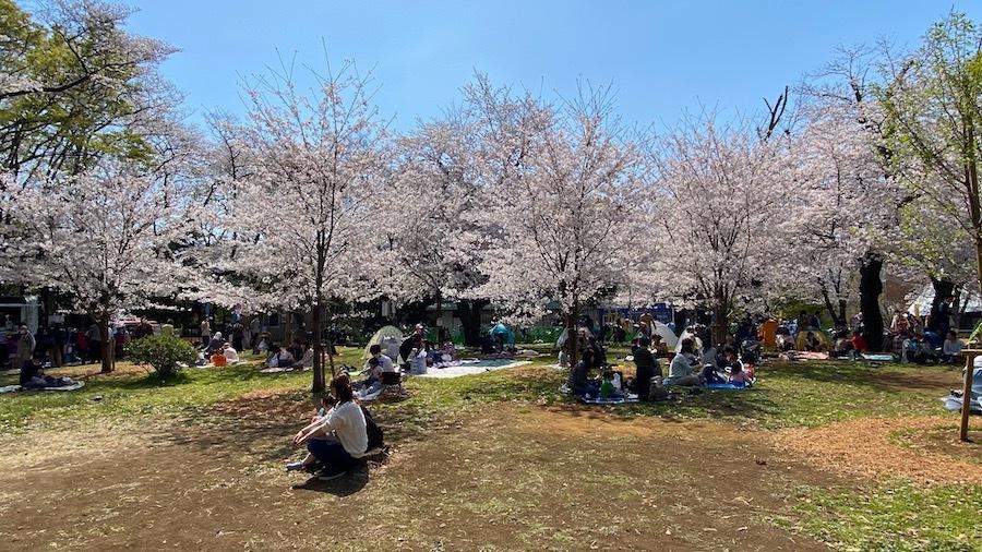 北区 桜と飛鳥山1号墳3