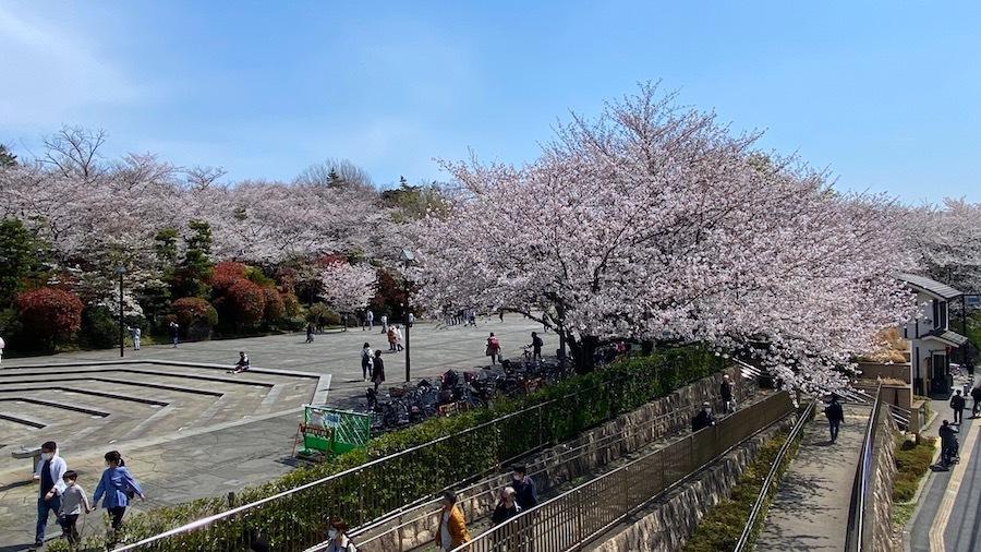 北区 桜と飛鳥山1号墳7