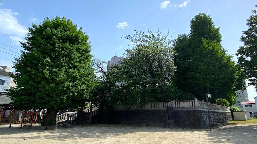 1586 前橋市第9号古墳(前橋八幡宮)3