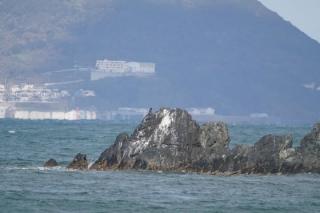009岩礁で休むカワウ、背景は玄界島