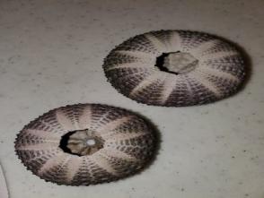 404ウニの殻
