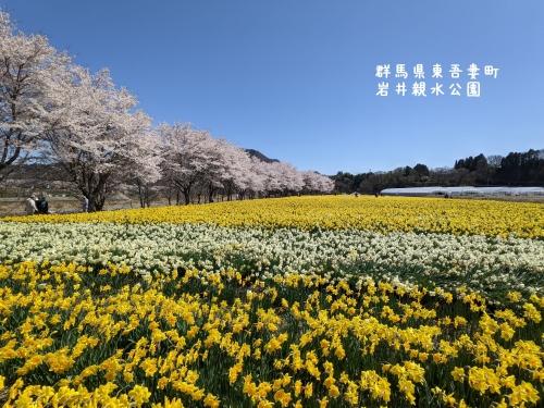 20210407群馬県東吾妻町、岩井親水公園1