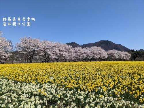 20210407群馬県東吾妻町、岩井親水公園2