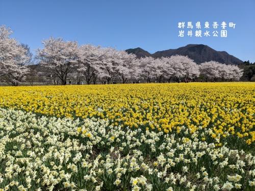 20210407群馬県東吾妻町、岩井親水公園3