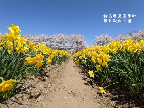 20210407群馬県東吾妻町、岩井親水公園4