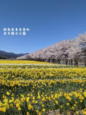 20210407群馬県東吾妻町、岩井親水公園5