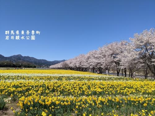20210407群馬県東吾妻町、岩井親水公園6